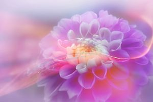 Фото бесплатно цвет, цветок, красочный