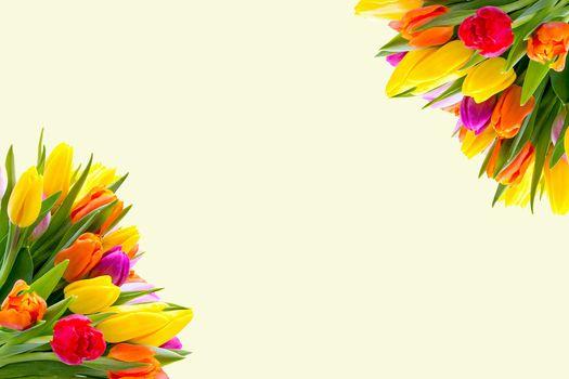 Фото бесплатно цветок, семейство маргариток, дизайн