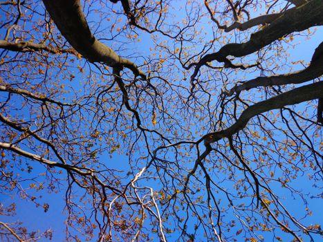 Фото бесплатно сезон, ветвь, солнечный свет