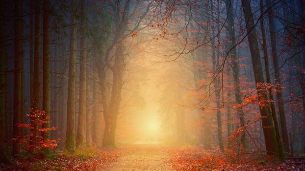 Photo free autumn, trail, painting