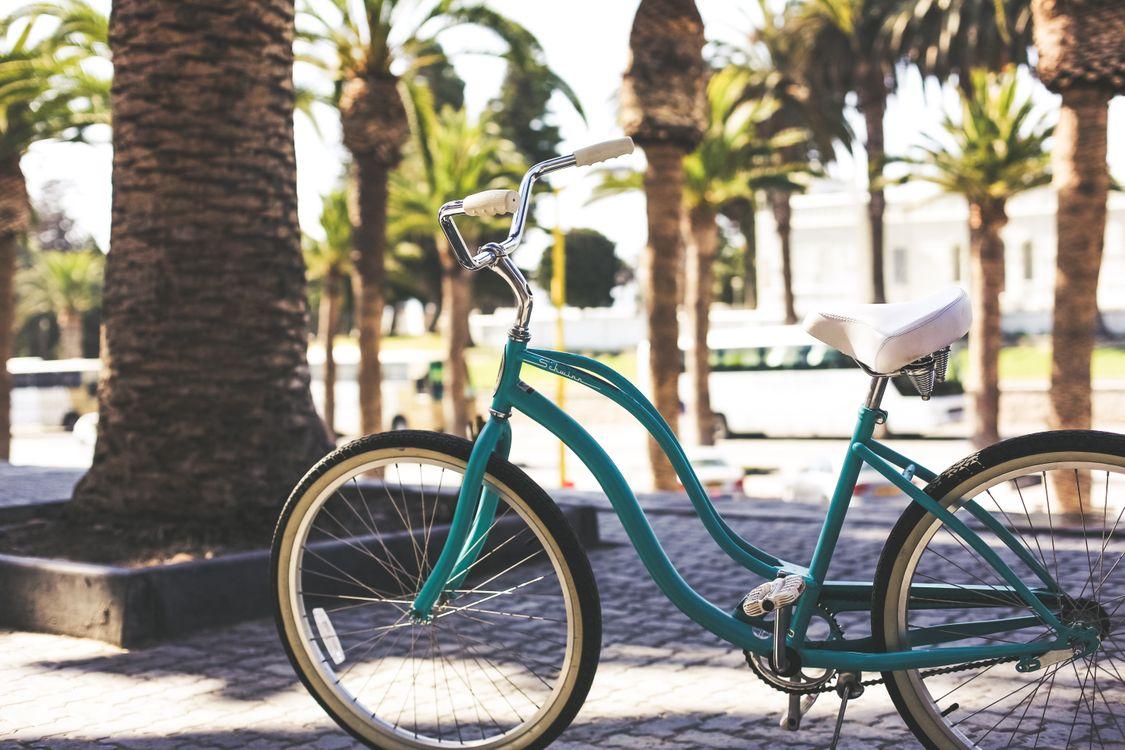 Фото бесплатно велосипед, улица, цветок, работа, свет, лиф, деревья, пальма, булыжник, разное
