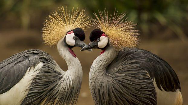 Photo free couple, birds, cute