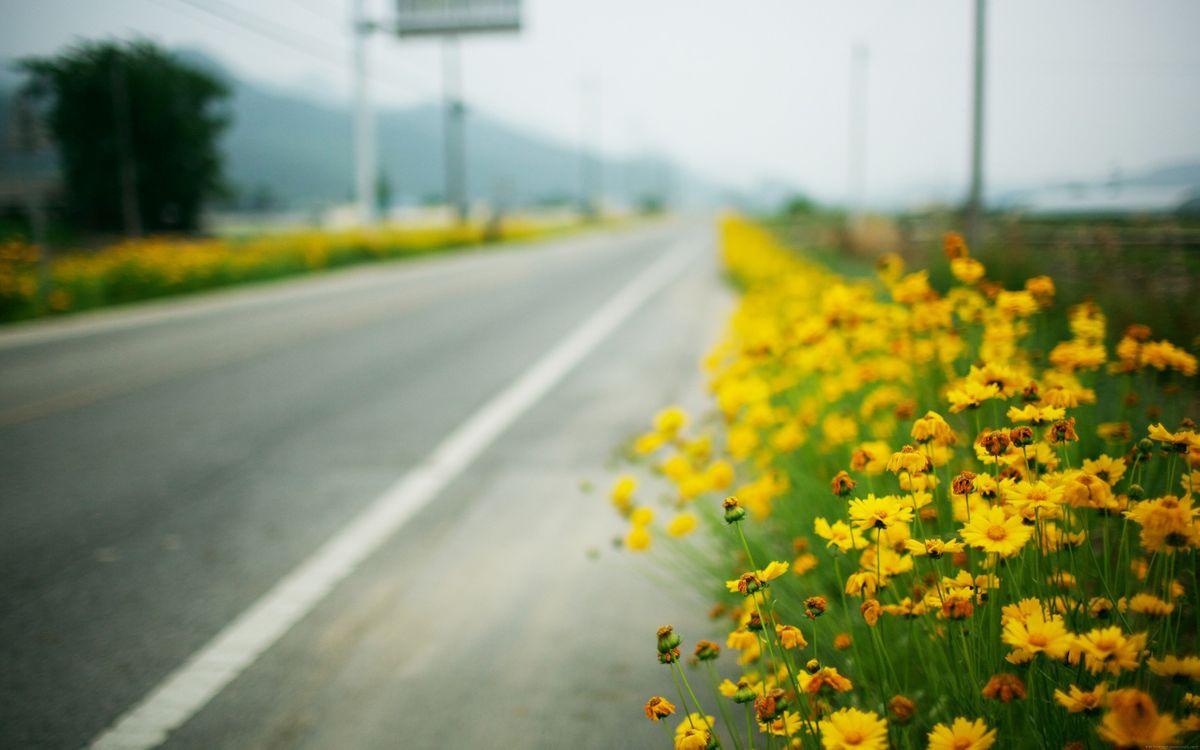 Обои дорога, желтые цветы, размытые картинки на телефон