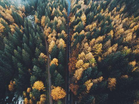 Photo free from the height of bird flight, trees, autumn