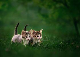 Фото бесплатно котята, малыши, трава