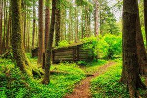 Бесплатные фото лес, деревья, домик, тропинка, пейзаж