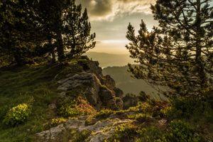 Фото бесплатно древесное растение, местности, пейзажи