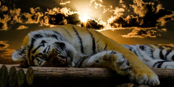 Фото бесплатно закат, дикая природа, отдохнуть