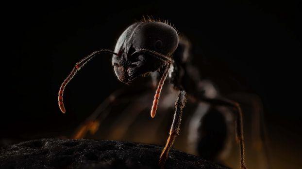 Заставки муравей, макро, насекомые