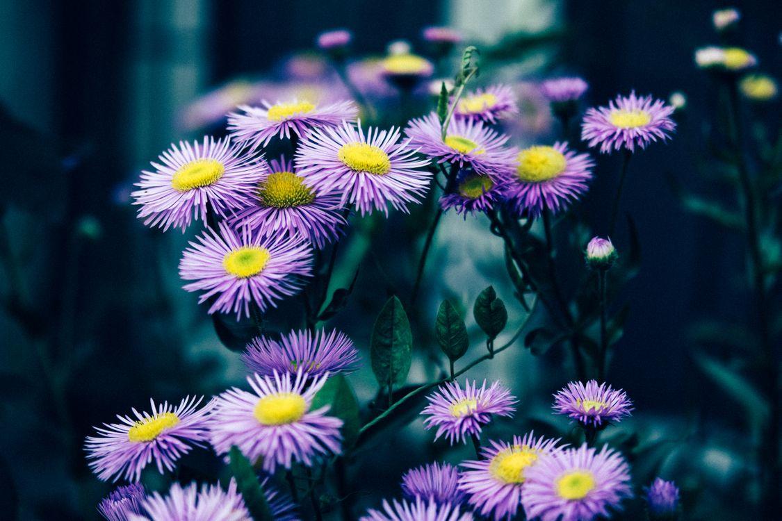 красивые цветы · бесплатная заставка