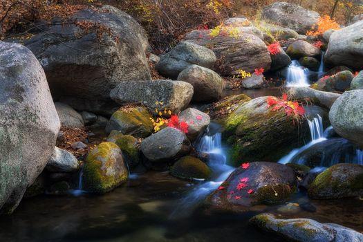 Photo free river, autumn leaves, rocks