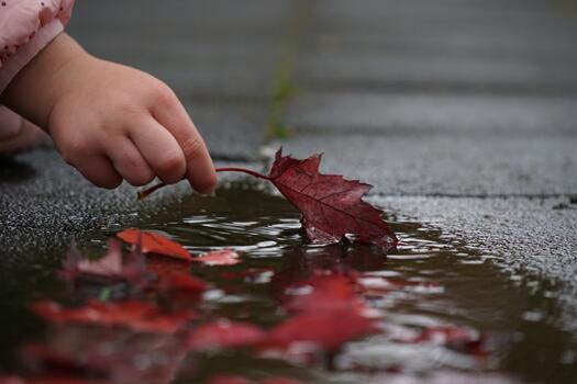 Фото бесплатно осень, опавшие листья, красные листья