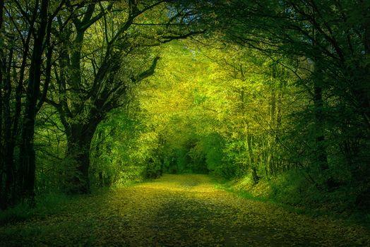 Фото бесплатно желтые, осенние листья, пейзаж
