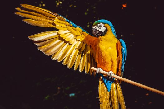 Photo free macaw parrot, wings, a majestic bird spreading wing coloring
