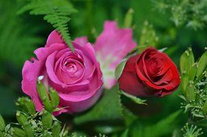 Фото бесплатно роза, красочный, цветочный