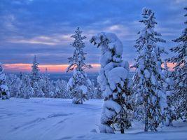 Заставки зима,закат,снег,деревья,сугробы,лес,природа