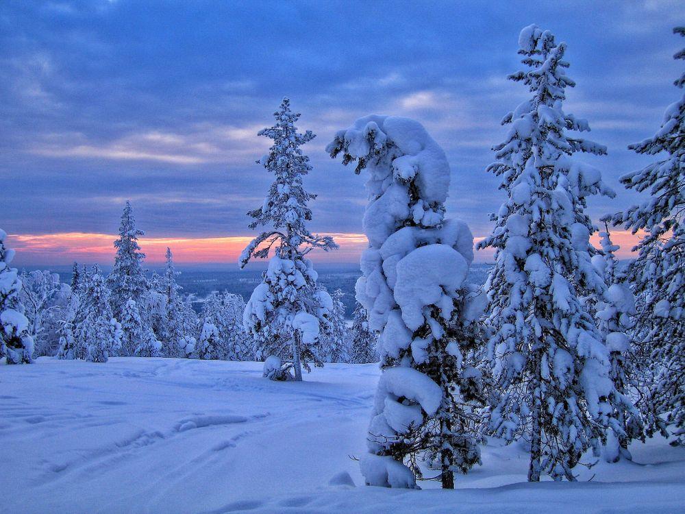 Фото бесплатно зима, закат, снег, деревья, сугробы, лес, природа, пейзаж, пейзажи
