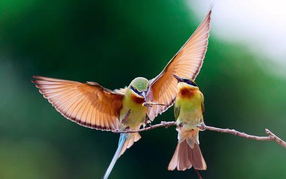 Фото бесплатно птицы, ветка, крылья