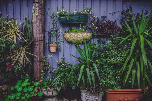 Photo free arecales, garden, backyard