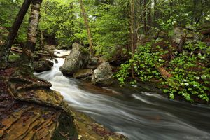 Фото бесплатно река, лес, течение, камни, деревья, природа, пейзаж