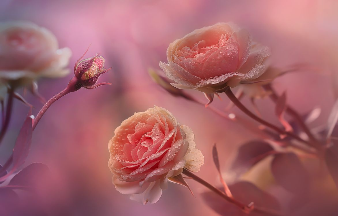 Фото бесплатно капли, ветка, цветы - на рабочий стол