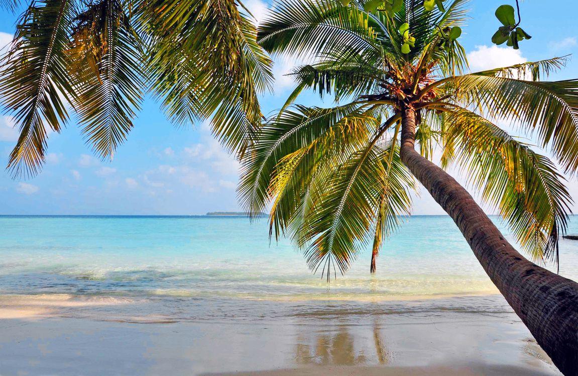Фото бесплатно тропики, море, остров, пляж, пальмы, отдых, пейзажи
