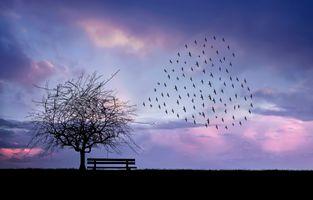 Заставки облака, стаи птиц, сердце