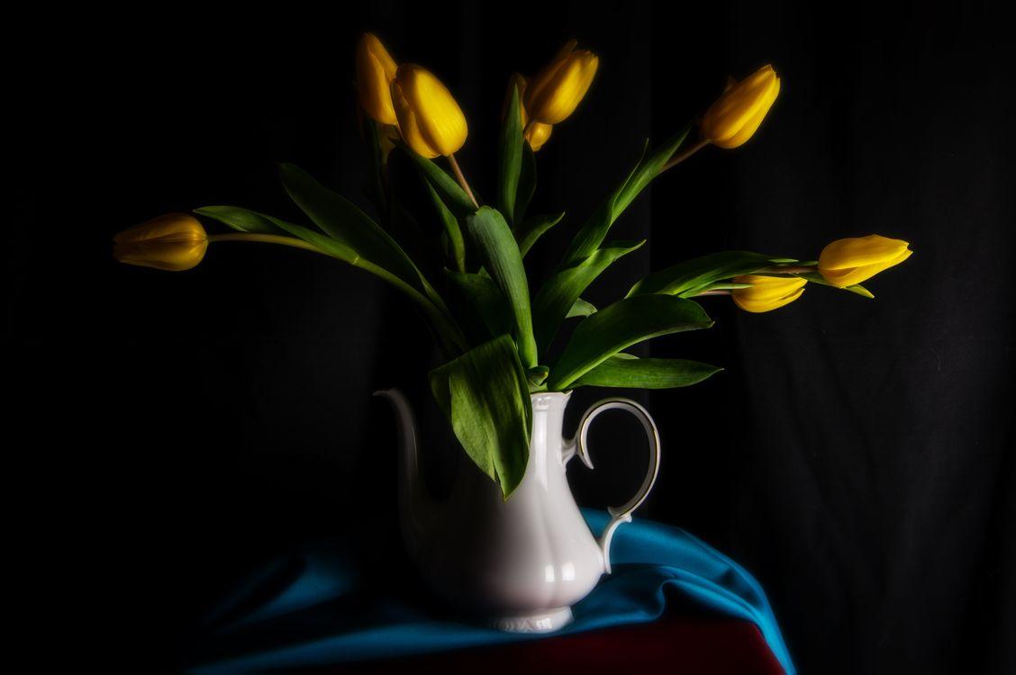 Фото цветы тюльпан желтый - бесплатные картинки на Fonwall