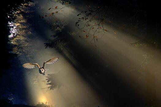 Фото бесплатно сипуха, лес, свет