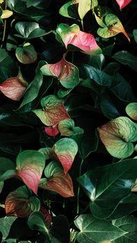 Photo free leaves, nature, close