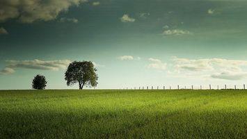 Бесплатные фото поле,деревья,трава,пейзаж