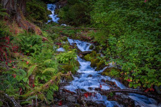 Фото бесплатно лес, природа, Columbia River Gorge