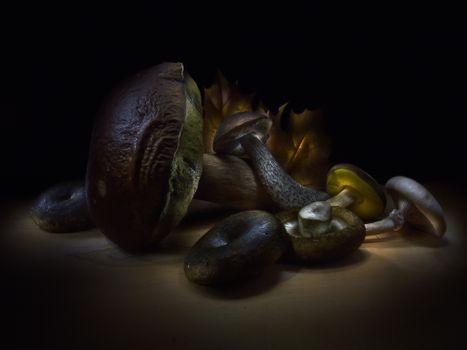Фото бесплатно грибы, белый, подберёзовик