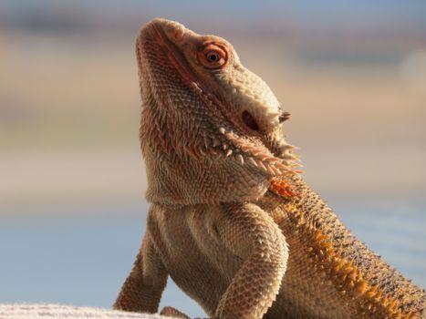 Photo free scary, reptile, lizard