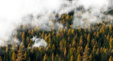 Заставки деревья, туман, облака
