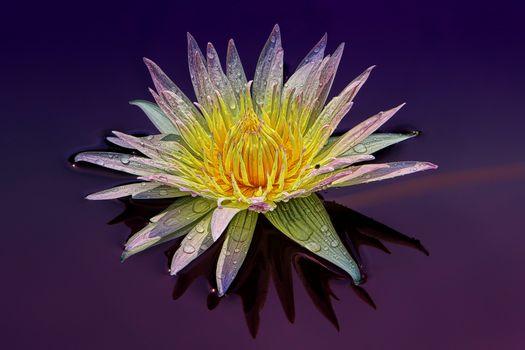 Фото бесплатно макро, пруд, цветок