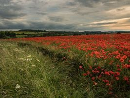 Фото бесплатно пейзаж, маки, закат