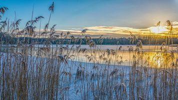 Фото бесплатно растения, озеро, пейзаж