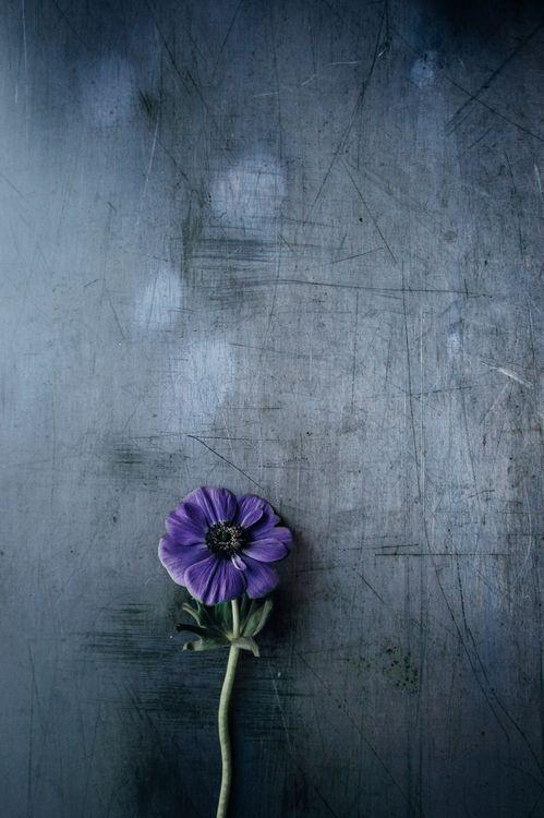 Фото бесплатно цветок, фиолетовый, стебель, фон, flower, violet, stem, background, цветы