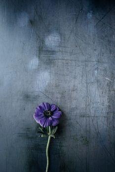 Фото бесплатно цветок, фиолетовый, стебель