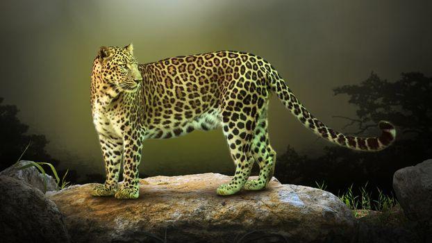 Фото бесплатно большая кошка, зверь, леопард