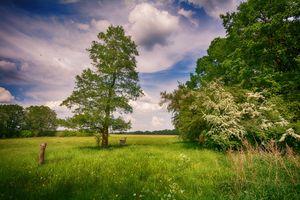 Бесплатные фото поле,небо,деревья,трава,олень,природа,пейзаж