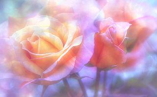 Заставки цвет, флора, макро
