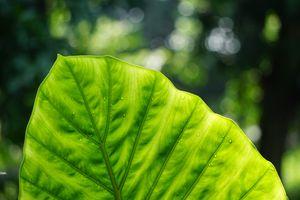 Фото бесплатно ботаника, листва, стебель растения