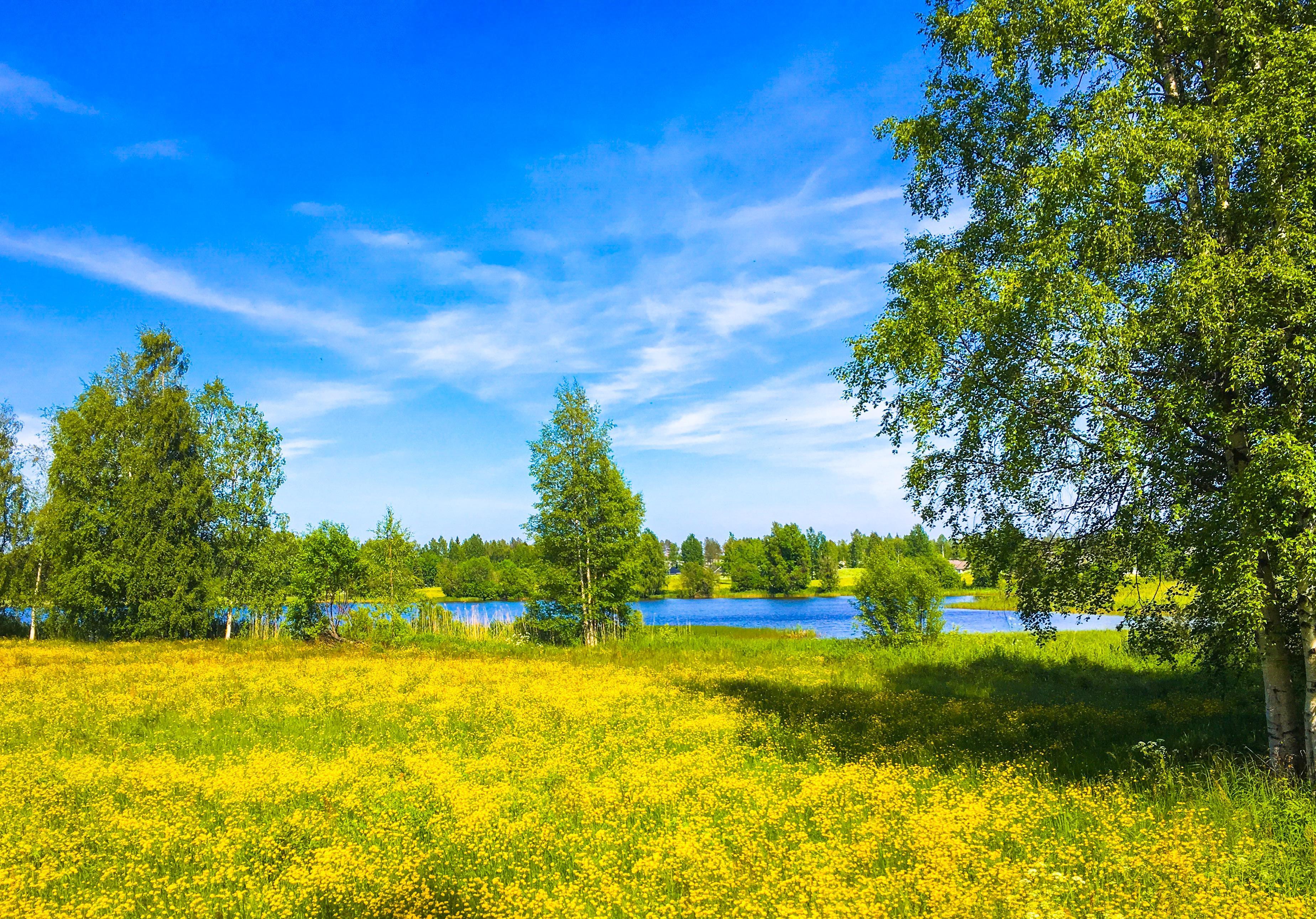 Обои озеро, поле, цветы, деревья
