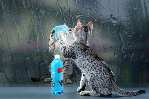 Photo free wet glass, kitten, detergent
