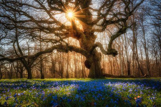 Фото бесплатно закат, поляна, цветы