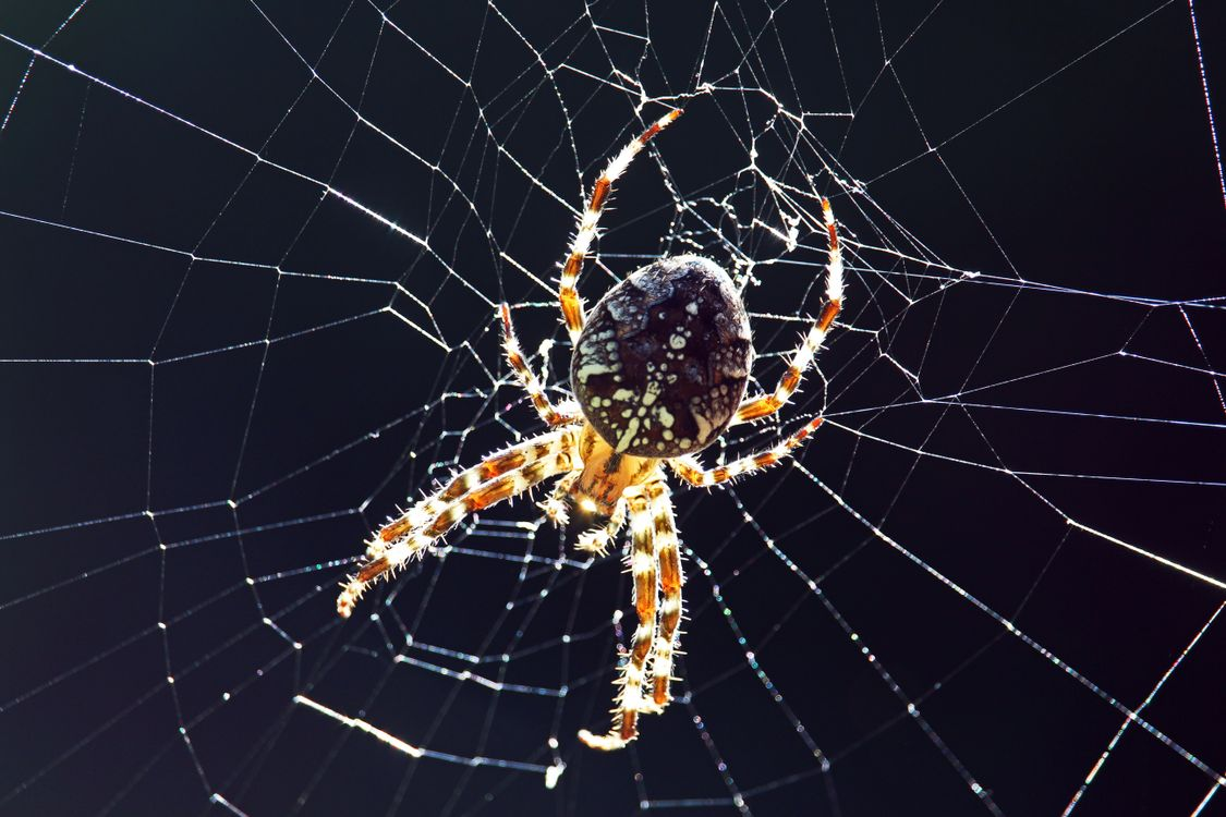 Фото животные пауки насекомые - бесплатные картинки на Fonwall