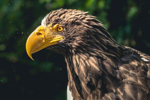 Фото бесплатно орел, птица, клюв