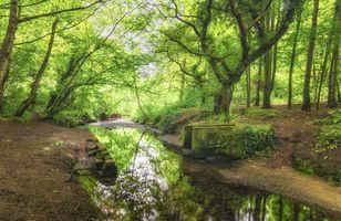 Бесплатные фото Великобритания,лес,ручей,река,деревья,пейзаж